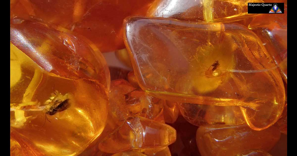 Amber Properties And Meaning Photos Crystal Information