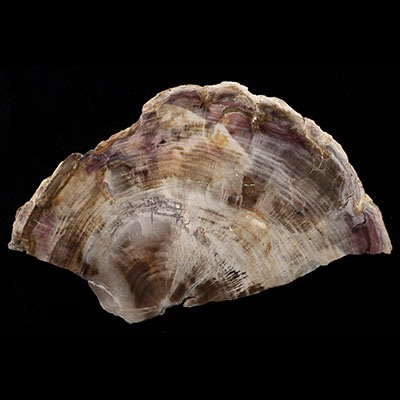 Petrified Wood Properties and Meaning Example Photo 4