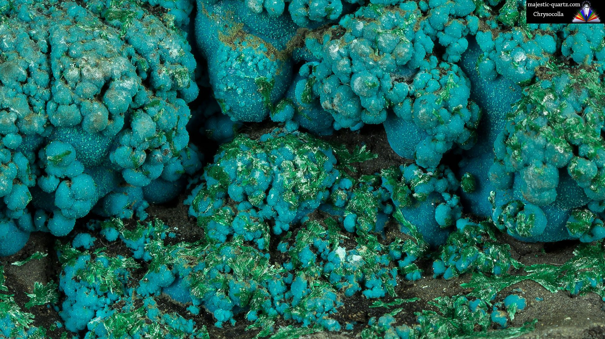 Chrysocolla Mineral Specimen - Photograph by Anthony Bradford