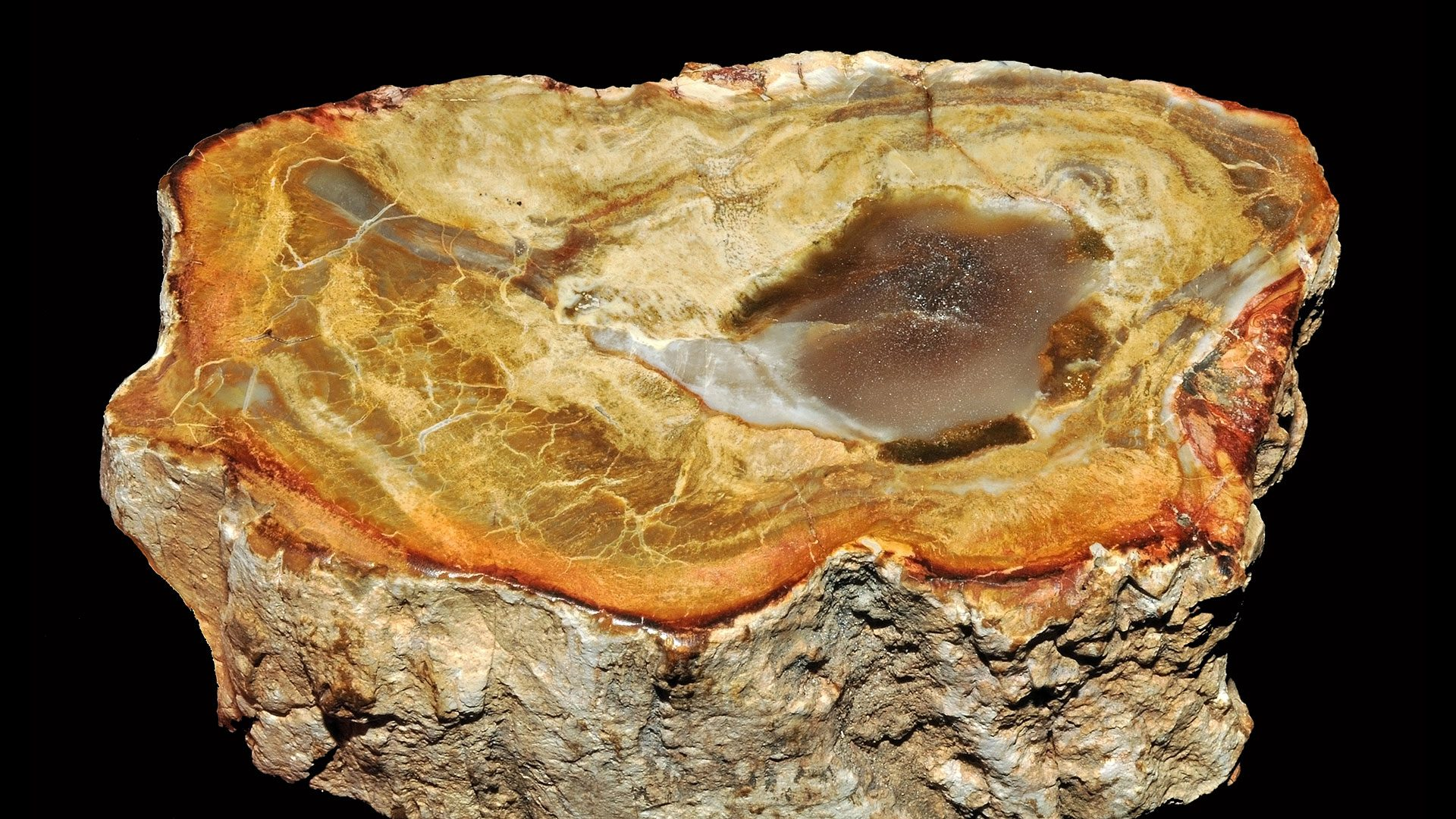 Petrified Wood Specimen - Original Photograph by Parent Géry
