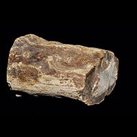 Petrified Wood Properties and Meaning